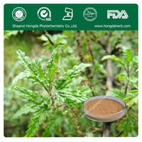 Factory Supply Nettle Leaf Extracts