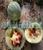2014 High quality red watermelon seeds good price