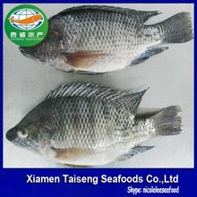 Frozen US Farm Raised Tilapia Whole Round 500-800