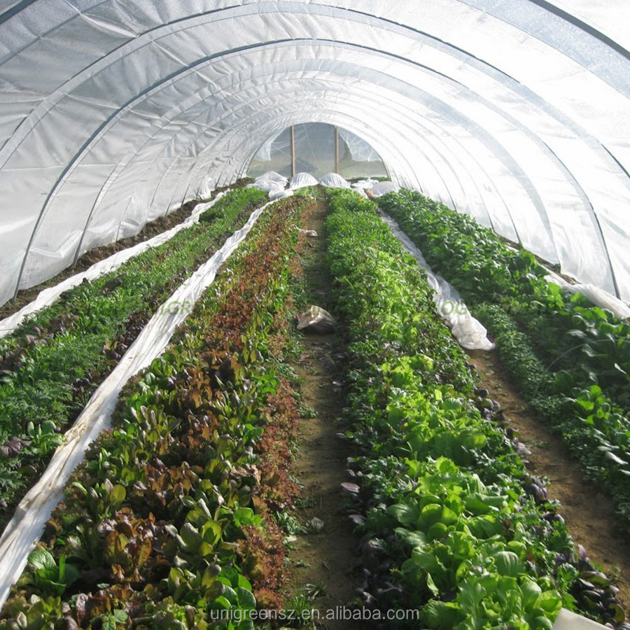 Low cost agriculture greenhouse for sale