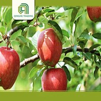 hot selling fresh fruit delicious china red star apples for wholesales