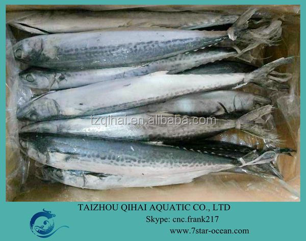 FROZEN SPANISH MACKEREL FISH WHOLE ROUND