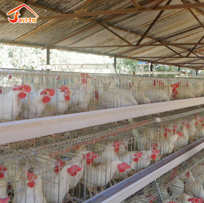 Hen Laying battery cage / chicken egg layer cages / brolier rate chick cage price for poultry farm in Nigeria