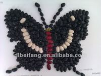 Black Bean/Black Kidney Beans( New crop, Heilongjiang origin, HPS)