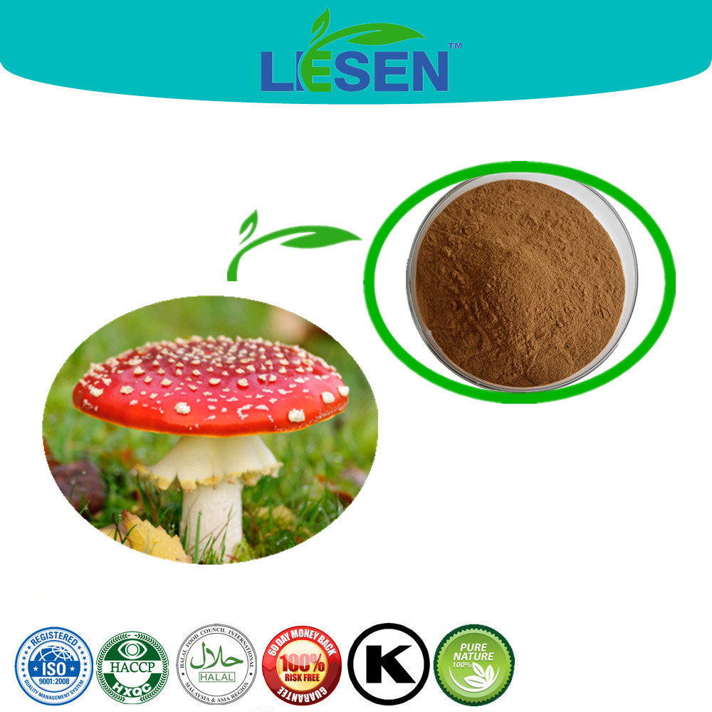 ISO, HACCP Certified Amanita Muscaria Extract Powder with Polysaccharide