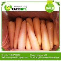 Wholesales Cheap 2016 Baby Carrot Lowest Price