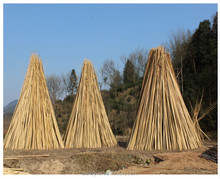 Excellent Quality Factory Price Garden Bamboo Canes for Sale