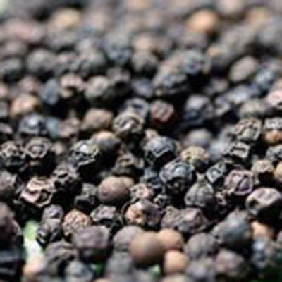 Black Pepper Fresh Pepper