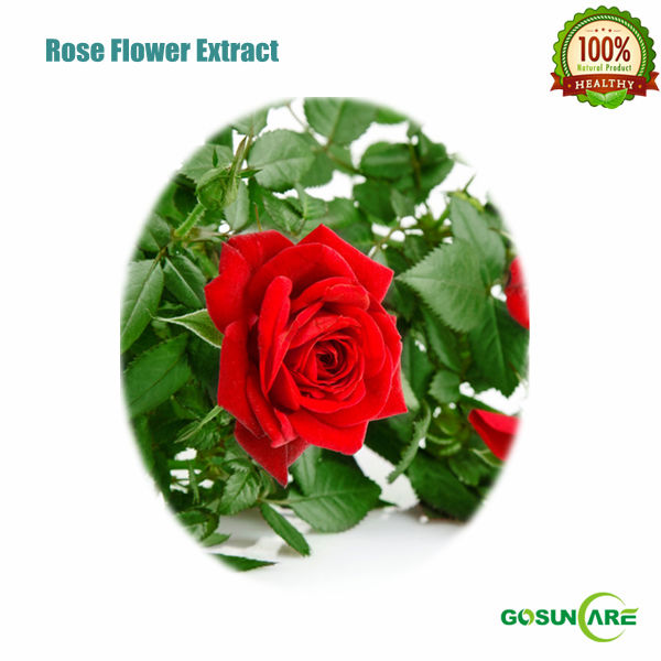 Natural 5:1 10:1 20:1 Rose Flower Extract