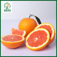 Foreign Trade Standard Red Orange Fruit