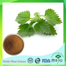 Pharmaceutical grade ISO ceritificated Chinese herb medicine Stinging Nettle extract