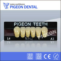 PIGEON SP3 three layer anterior artificial teeth dental products china