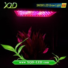 300w LED Grow Light with Full Spectrum for coca seed and fresh soursop fruit