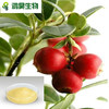 high quality cranberry fruit powder sample free