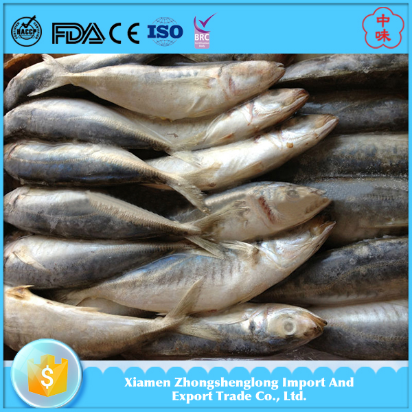 New Catching Whole Frozen Horse Mackerel Fish Import Export Seafood