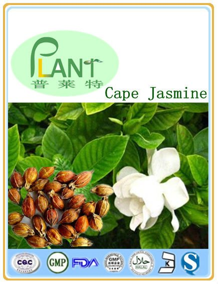 GMP Manufacturer High Quality &100% natural Cape jasmine fruit extract;5-50%,98%Geniposide