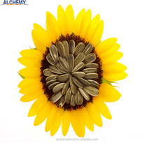 Free sample organic sunflower seeds in shell
