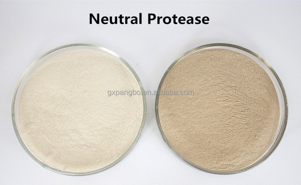 Neutral Protease