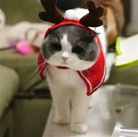 Wholesale Dogs And Cats Christmas Headgear Pet Products