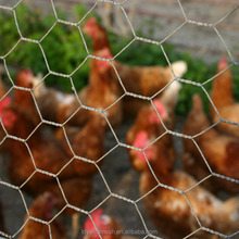 Galvanized cheap chicken coop netting/chicken coop wire mesh