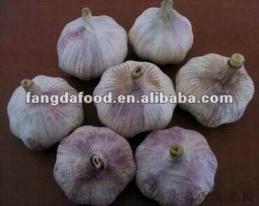 good farmers fresh normal white garlic from china