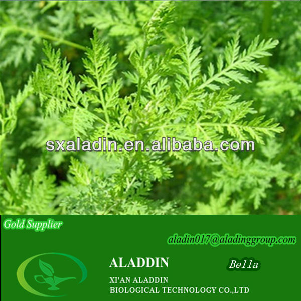 100% High Quality Artemisia Annua Extract/ Artemisia Annua used in Anti-inflammatory and cancer