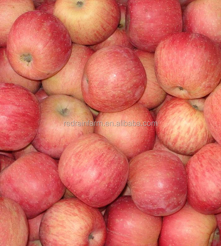 Professional delicious high quality fresh Fuji apple