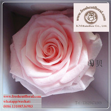 Eternal Order Preserved Cutting Roses For Send Floral Arrangements