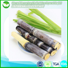 /product-gs/100-natural-and-healthy-sugar-cane-juice-powder-60340719663.html