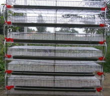 Brand new battery quail cages for poultry farm with high quality h-type quail cage