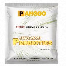 Buy culturing nitrifying bacteria for fish tank
