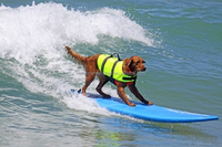 Wholesale Life Saving Jacket for Pets, Dog Vest, Dog Life Jacket PT180