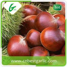 Chinese fresh raw chestnuts wholesale