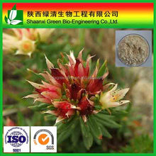 Anti-Radiation&Whitening, Rhodiola Rosea Extract Salidroside/Rosavin/Gum rosin