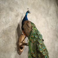 Animals Hanging Wall Mounted Resin Sculpture Life Size Peacock