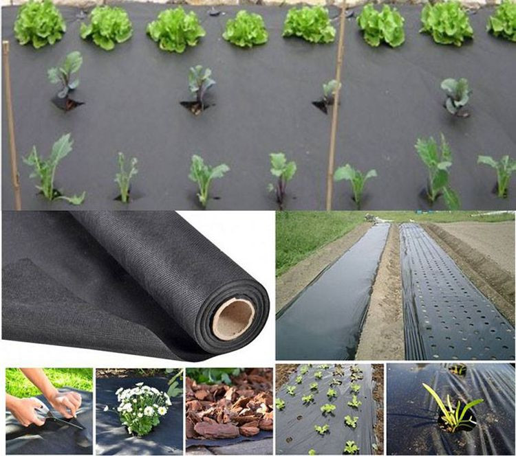 Best Pp Black Fabric Lawn Weed Control Without Mulch Buy
