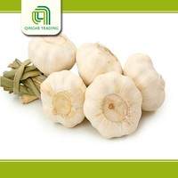 big size garlic for wholesales