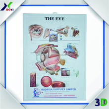 3D Medical Anatomical Plastic Chart/Promotional Gift Item for Doctors