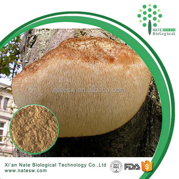 Amazing Anti-Cancer herb extract Lion's Mane Mushroom or Hericium Erinaceus Extract Polysaccharide 30% 50% Fruiting body