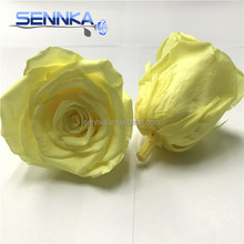 Inartificial Ecuadorian Roses DIY Preserved Rose Head Docrative Real Fresh Flower