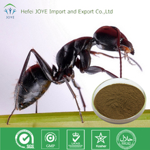 High Quality Polyrachis Black Ant extract Powder 10:1 and 20:1