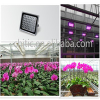 Multi-color LED rose flower light, orchid,tulip,gerbera light