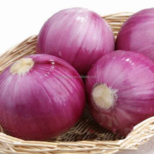 Natural Fresh Organic Red Onion