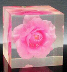 Perspex block embed flower as indian souvenir