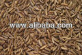 Best Quality Caraway