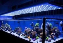 200w top quality 160lm/w coral reef used led aquarium light