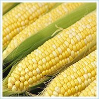 YELLOW CORN ,MAIZE,YELLOW MAIZE