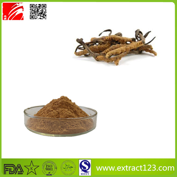 High quality low price cordyceps sinensis extract powder