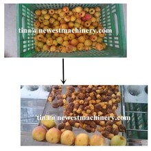 Top quality seed removing machine /apricot pitter /plum pitter machine