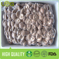 Hot sale smooth surface fresh shiitake mushroom